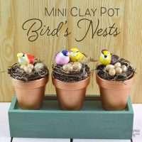 Mini Clay Pot Bird's Nests Feature